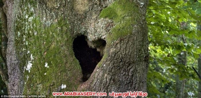 صور-قلوب-طبيعية-3