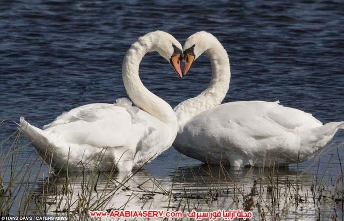 صور قلوب من الطبيعة