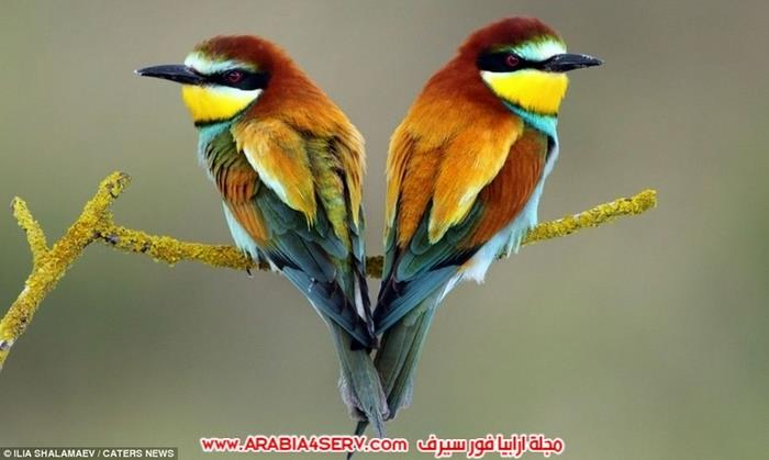 صور-قلوب-من-الطبيعة-7