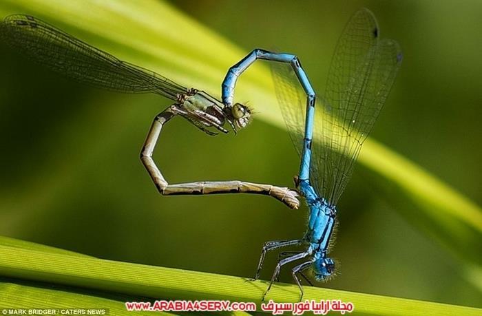 صور-قلوب-من-الطبيعة-9
