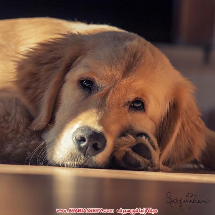 صور-كلاب-جميلة-جديدة-روعة-للتحميل-4