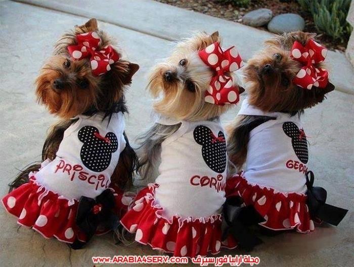 صور-كلاب-جميلة-جديدة-روعة-للتحميل-5