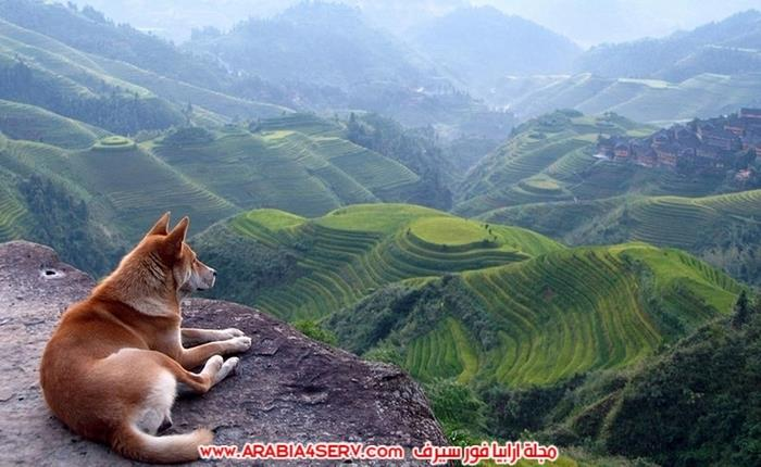 صور-كلاب-جميلة-جديدة-روعة-للتحميل-7