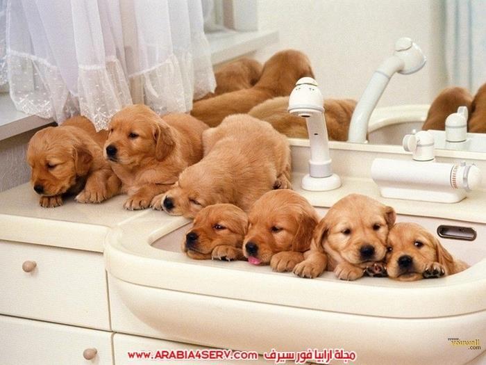 صور كلاب جميلة جديدة روعة للتحميل