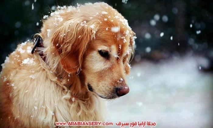 صور-كلاب-كيوت-عسل-روعة-1