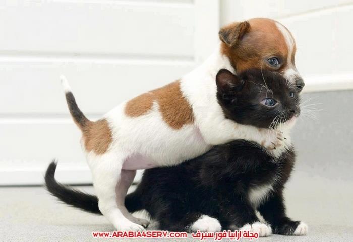 صور-كلاب-مع-قطط-جميلة-كيوت-1