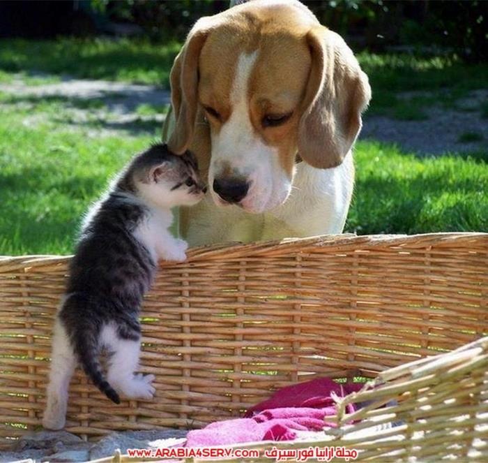 صور-كلاب-مع-قطط-جميلة-كيوت-4