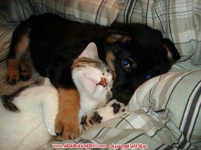 صور-كلاب-مع-قطط-جميلة-كيوت-7