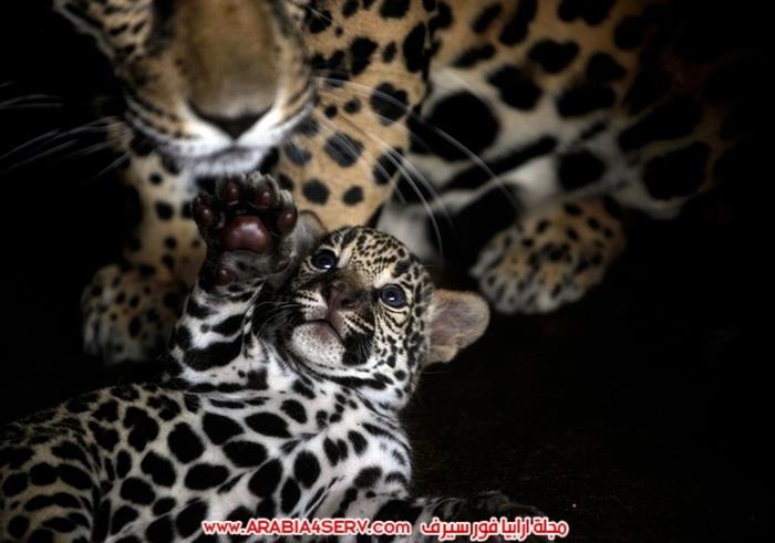 صور-مخلوقات-متنوعة---تصوير-احترافي-1