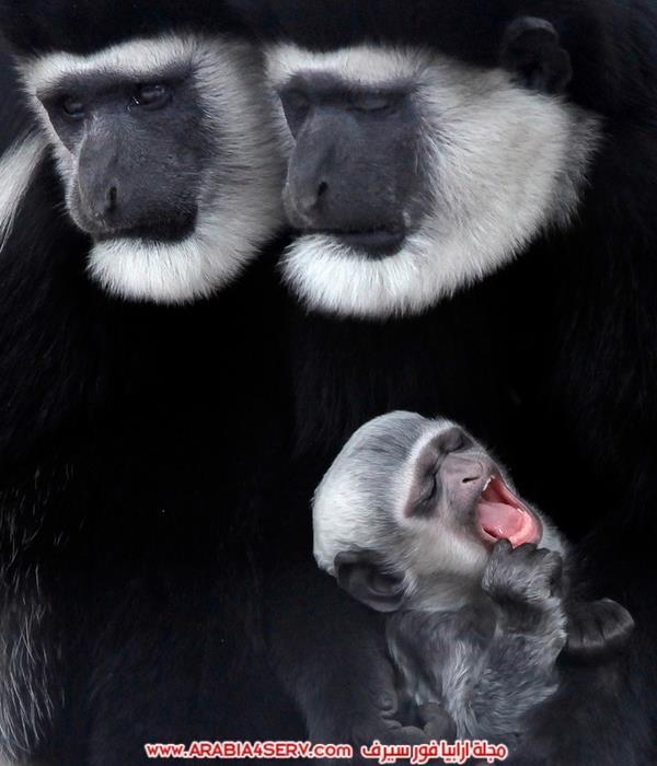 صور مخلوقات متنوعة - تصوير احترافي