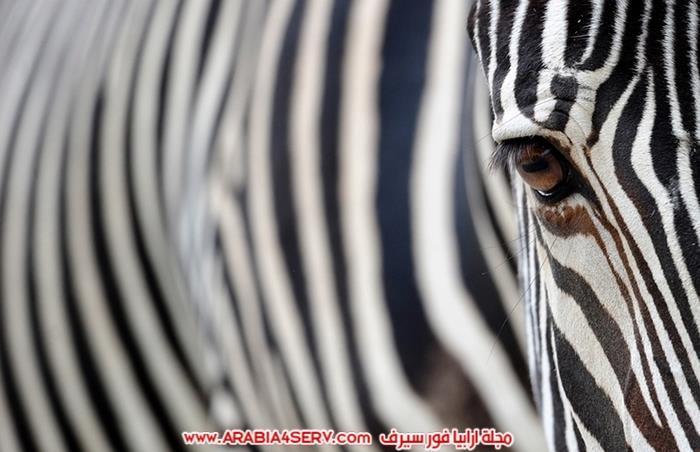 صور-مخلوقات-متنوعة---تصوير-احترافي-13