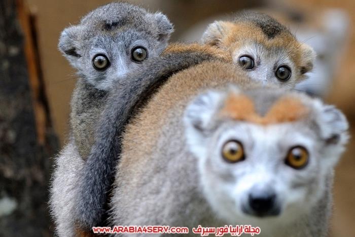 صور-مخلوقات-متنوعة---تصوير-احترافي-4