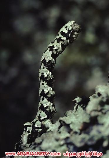 صور-مموهة-للحيوانات---حيوانات-تتلون-حسب-الطبيعة-1