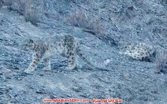صور-مموهة-للحيوانات---حيوانات-تتلون-حسب-الطبيعة-16