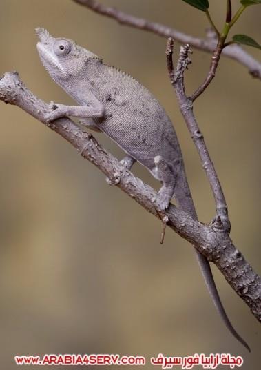 صور-مموهة-للحيوانات---حيوانات-تتلون-حسب-الطبيعة-2