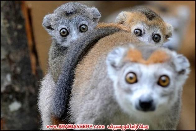 صور نادرة للمخلوقات المتنوعة