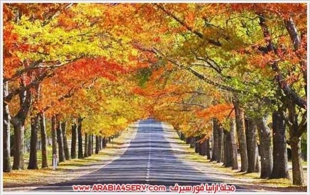 طريق جميل جدا وسط الاشجار