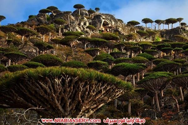 عجائب-و-غرائب-الطبيعة-حول-العالم-بالصور-30
