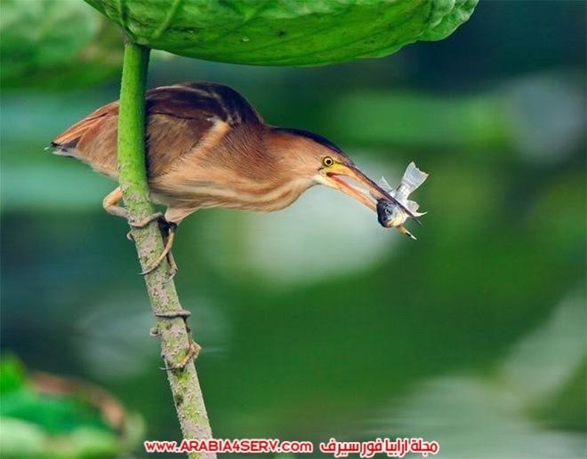 اجمل-و-احلى-صور-طيور-و-عصافير-ملونة-3