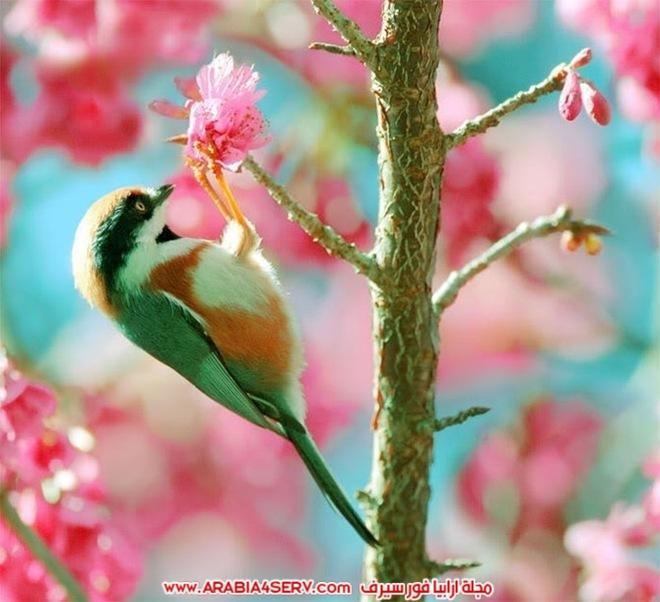 اجمل و احلى صور طيور و عصافير ملونة