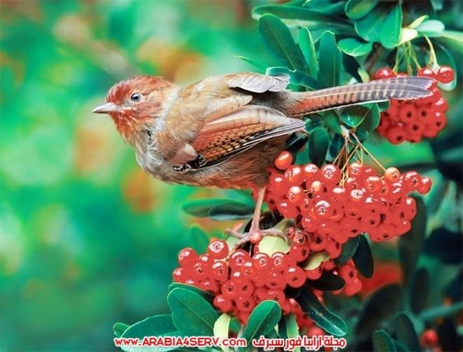 اجمل-و-احلى-صور-طيور-و-عصافير-ملونة-7