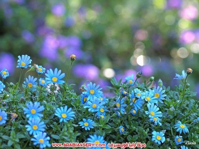 اجمل و احلى صور عصافير و زهور