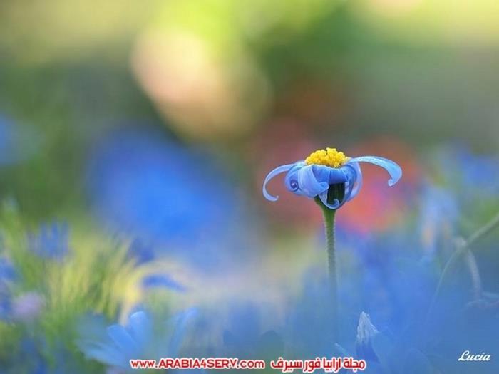اجمل-و-احلى-صور-عصافير-و-زهور-2