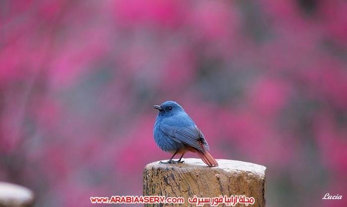 اجمل-و-احلى-صور-عصافير-و-زهور-3