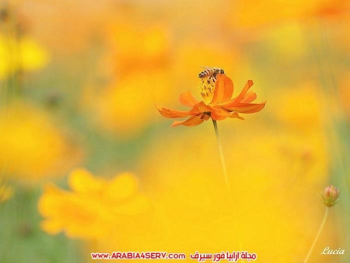 اجمل-و-احلى-صور-عصافير-و-زهور-6