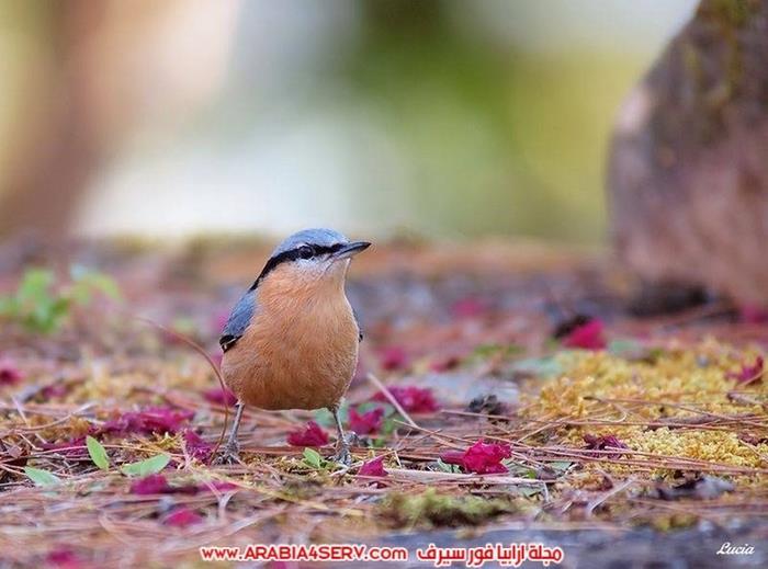 اجمل-و-احلى-صور-عصافير-و-زهور-8