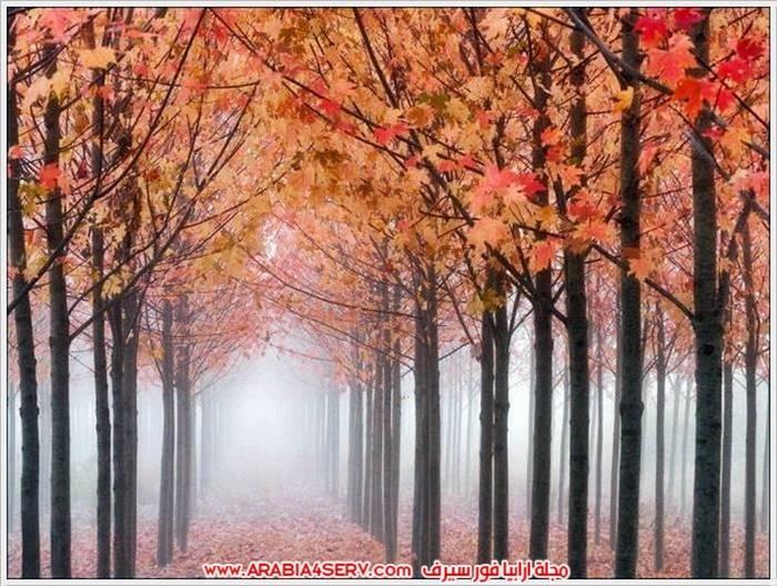 الوان-رائعة-للطبيعة-بالصور-10