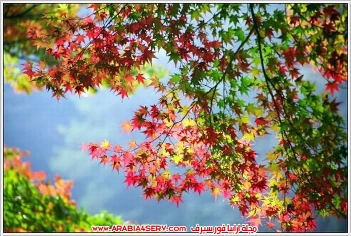 الوان-رائعة-للطبيعة-بالصور-8