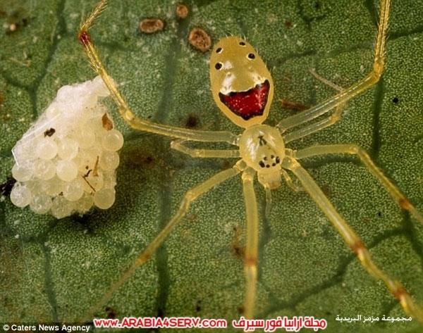 صور-طريفة-لعنكبوت-مبتسم-1