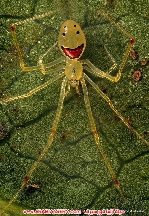 صور طريفة لعنكبوت مبتسم