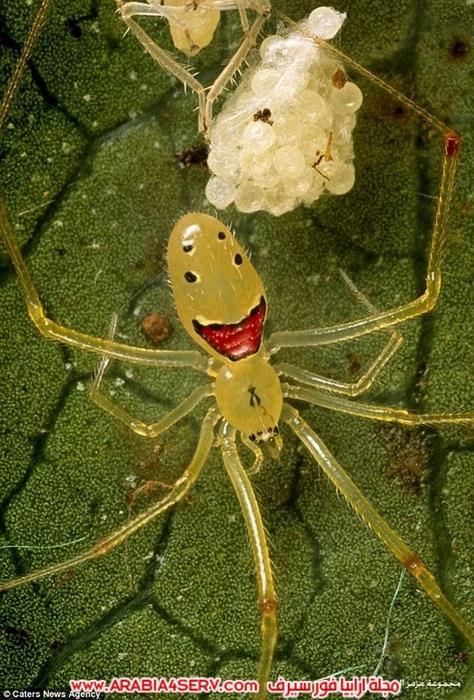صور-طريفة-لعنكبوت-مبتسم-3