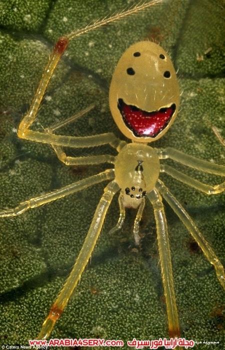 صور-طريفة-لعنكبوت-مبتسم-4