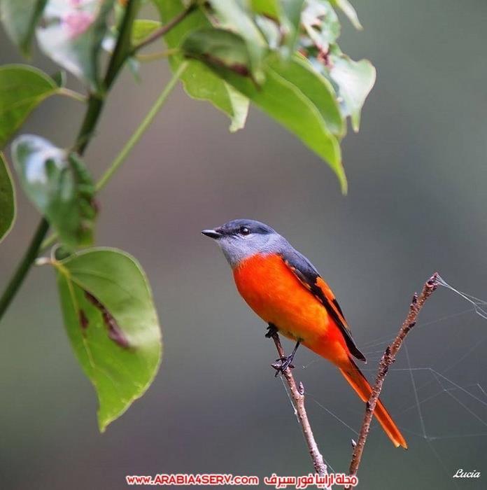 صور-طيور-عصافير-و-زهور-طبيعية-جميلة-جدا-11