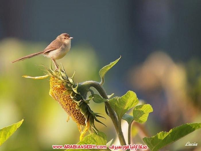 صور-طيور-عصافير-و-زهور-طبيعية-جميلة-جدا-2