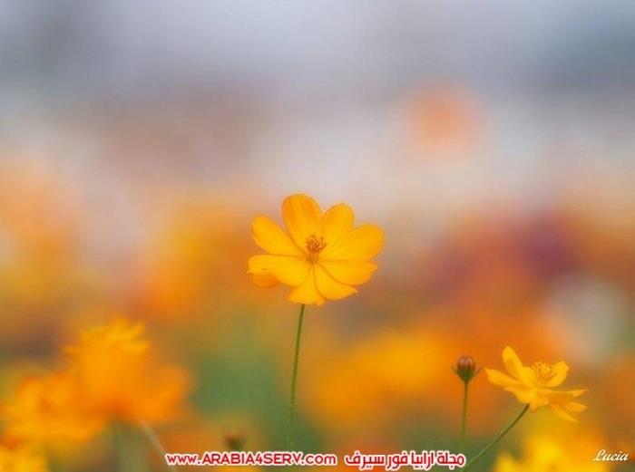 صور-طيور-عصافير-و-زهور-طبيعية-جميلة-جدا-4