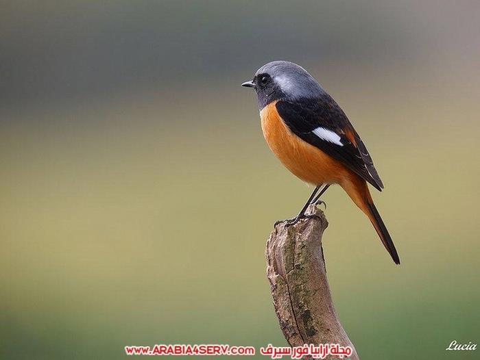 صور طيور عصافير و زهور طبيعية جميلة جدا