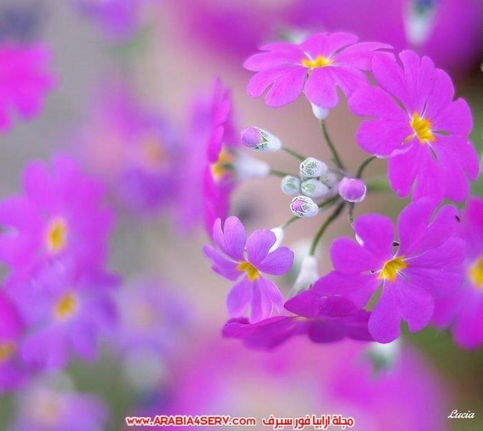 صور-طيور-عصافير-و-زهور-طبيعية-جميلة-جدا-7