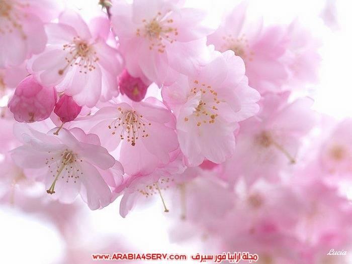 صور-طيور-عصافير-و-زهور-طبيعية-جميلة-جدا-8