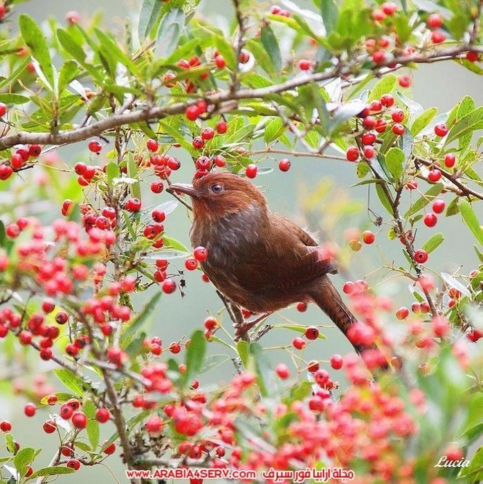 صور-طيور-عصافير-و-زهور-طبيعية-جميلة-جدا-9