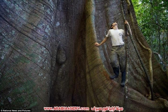 صور عجائب و غرائب الطبيعة