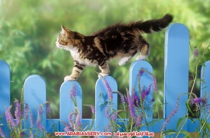 صور-قطط-اجمل-احلى-اروع-صور-قطط-10