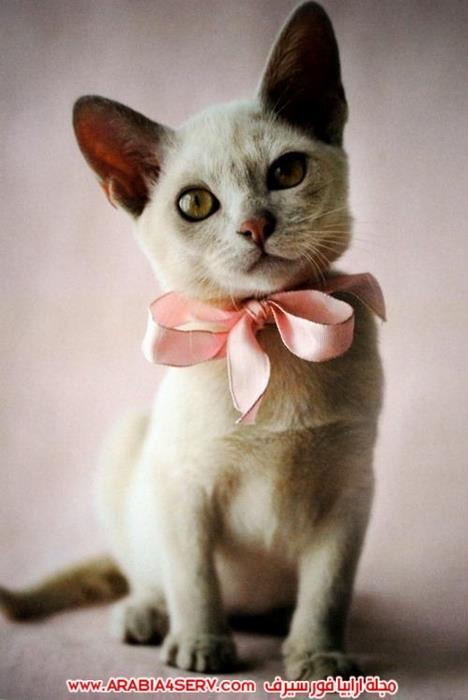 صور-قطط-اجمل-احلى-اروع-صور-قطط-5