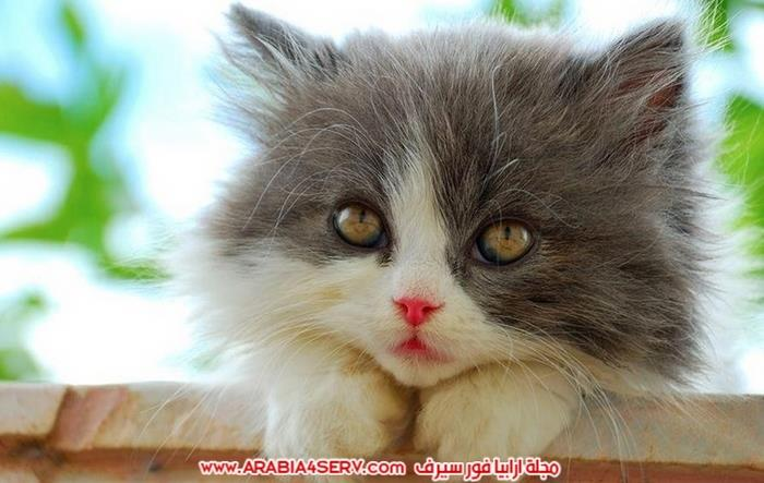 صور-قطط-اجمل-احلى-اروع-صور-قطط-9