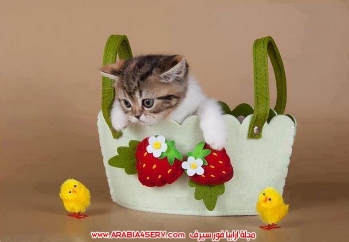 صور-قطط-طريفة-جميلة-كيوت-اوي-روعة-10