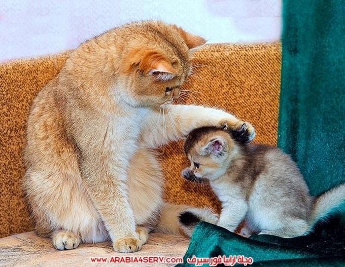 صور-قطط-طريفة-جميلة-كيوت-اوي-روعة-2