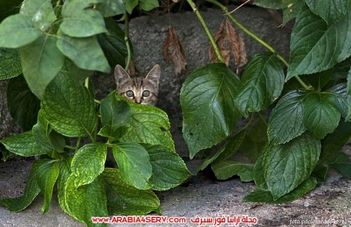 صور-قطط-طريفة-جميلة-كيوت-اوي-روعة-3